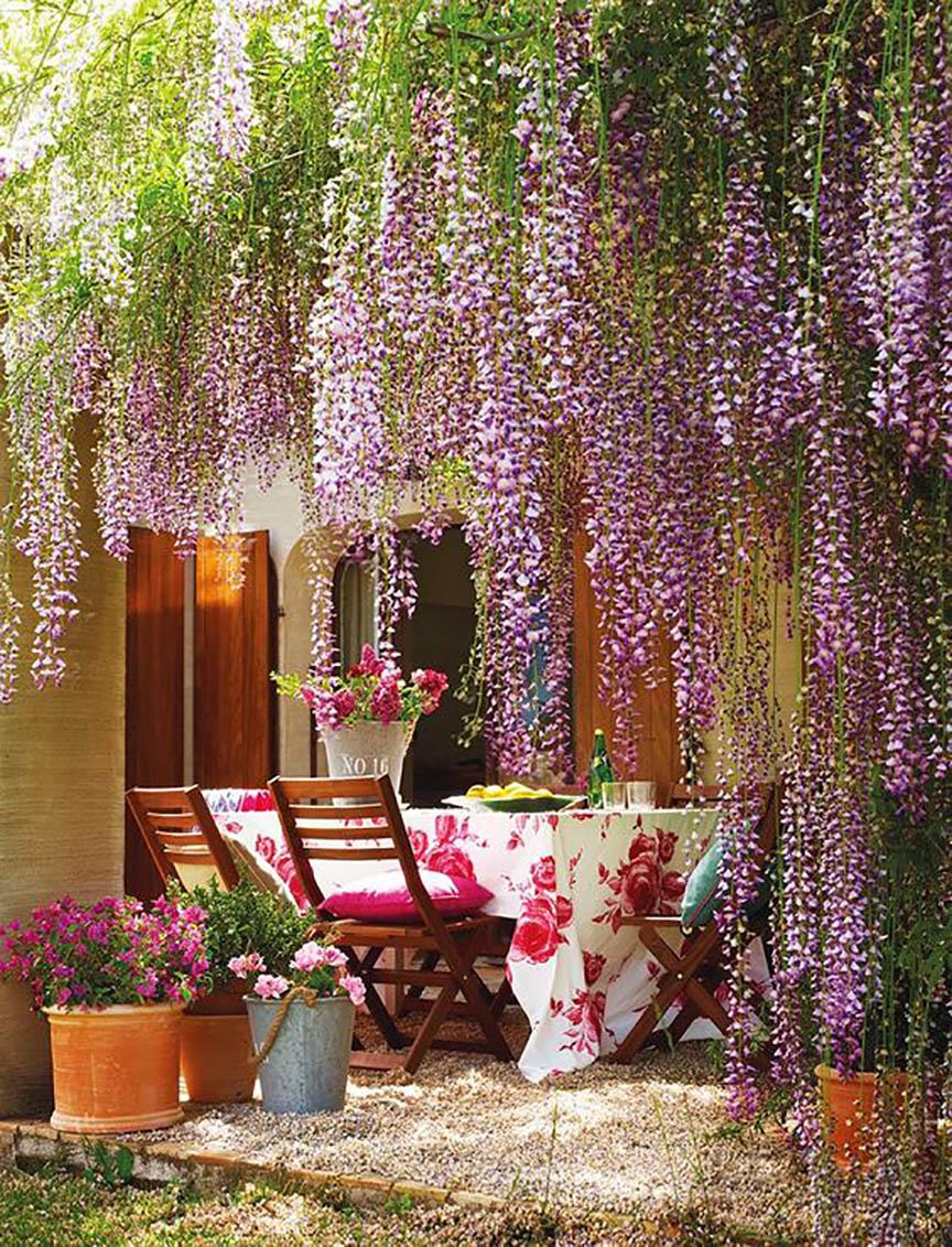 plantas para jardín, yosíquesé