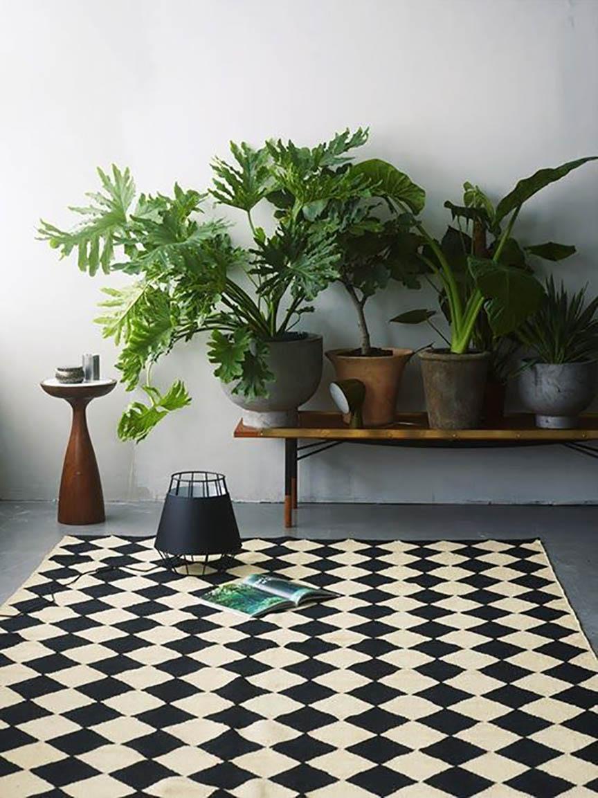 plantas en decoración, yosíquesé